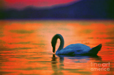 Unity Painting - Swan In The Balaton Lake by Odon Czintos