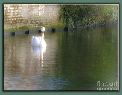 Art Print featuring the photograph Swan In The Canal by Victoria Harrington