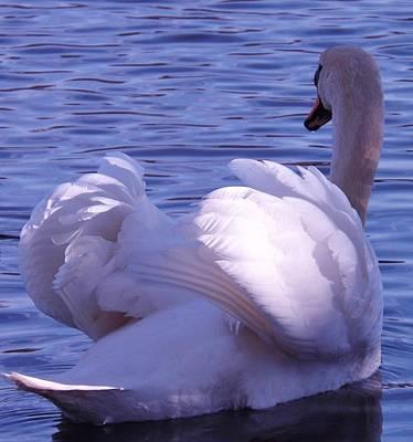 Photograph - Swan by Katharina May