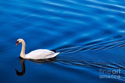 Swan Lake Art Print by Adrian Evans
