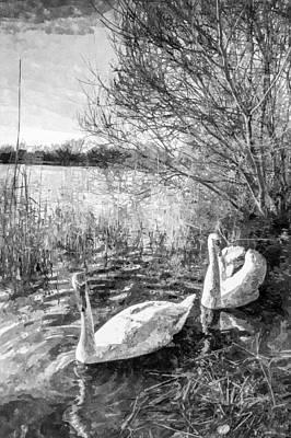 Swan Pair Photograph - Swan Lake Art by David Pyatt