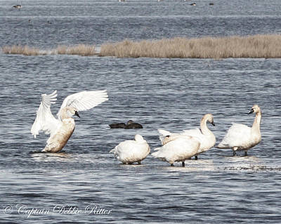 Photograph - Swan Lake by Captain Debbie Ritter
