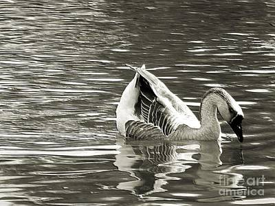 Photograph - Swan Lake Monochrome Digital Art  by Robyn King