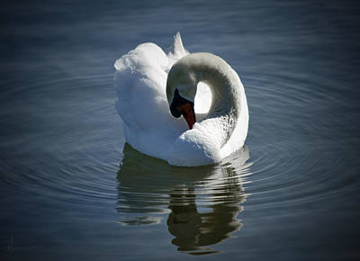 Photograph - Swan Lake by Pennie  McCracken