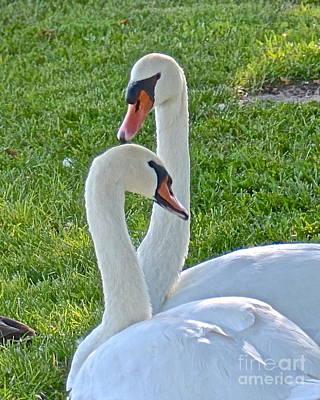 Photograph - Swan Mates by Carol  Bradley