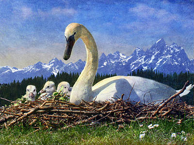 Gosling Painting - Swan Nesting Grand Teton Park by R christopher Vest