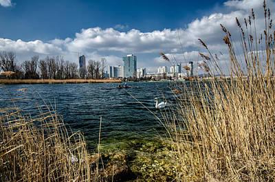Photograph - Swan by Oleksandr Maistrenko
