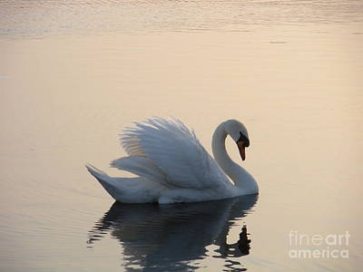 Swan On A Lake Art Print by Sophia Elisseeva