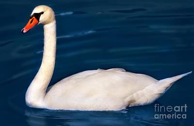 Manipulation Photograph - Swan On Blue by Iris Richardson