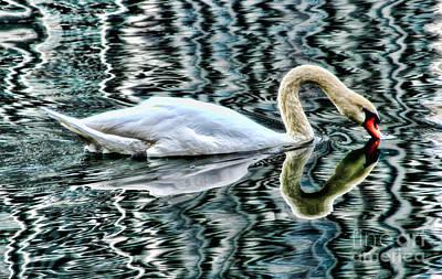 Photograph - Swan On Lake Eola By Diana Sainz by Diana Raquel Sainz