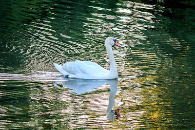 Art Print featuring the photograph Swan On Water  by Trace Kittrell