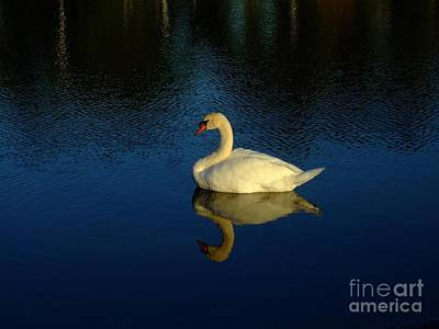 Swan Reflection Art Print by Bob Sample
