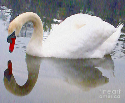 Photograph - Swan Reflection by Nina Silver