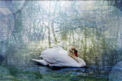 Photograph - Swan Reflections by Darlene Bell