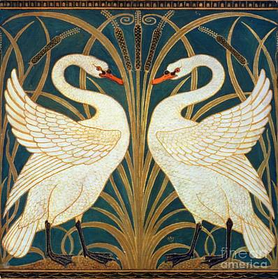 Swan Rush And Iris Art Print