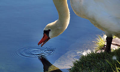 Art Print featuring the photograph Swan Song by Cathy Donohoue