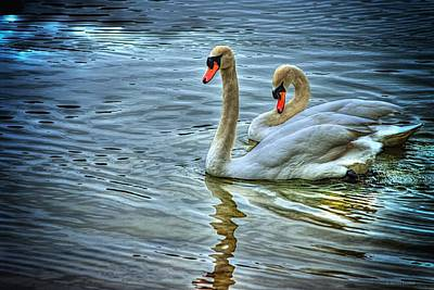 Photograph - Swan Song by Dennis Baswell