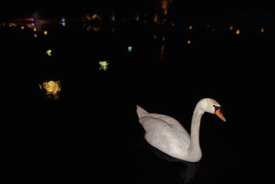 Photograph - Swan Song - Flower Lanterns by Jason Politte