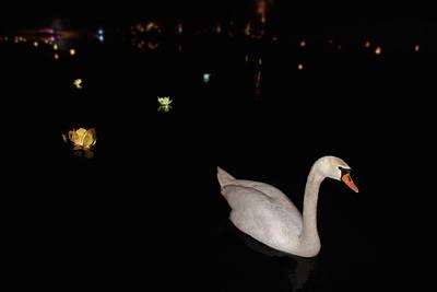 Photograph - Swan Song - Flower Lanterns by Jason Politte