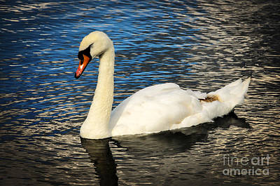 Photograph - Swan Song by Ken Johnson