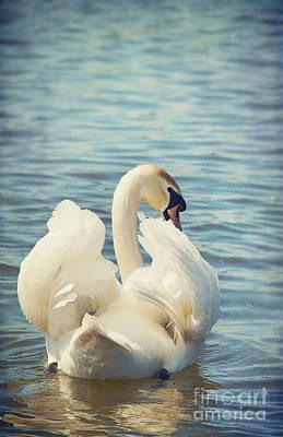Swan Digital Art - Swan by Svetlana Sewell