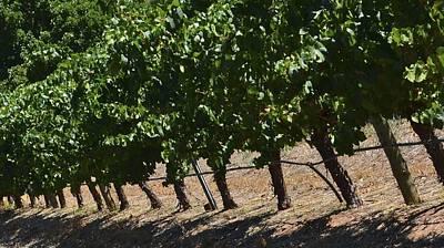 Photograph - Swan Valley Vineyard 1.1 by Cheryl Miller