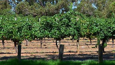 Photograph - Swan Valley Vineyard 1.2 by Cheryl Miller