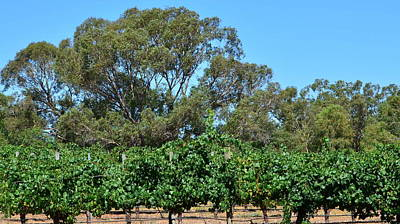 Photograph - Swan Valley Vineyard 1.3 by Cheryl Miller