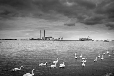 Swans And Ships. Art Print by Gary Gillette