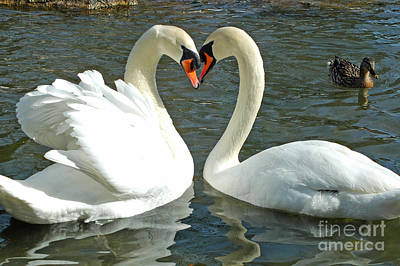 Swans At City Park Art Print by Olivia Hardwicke