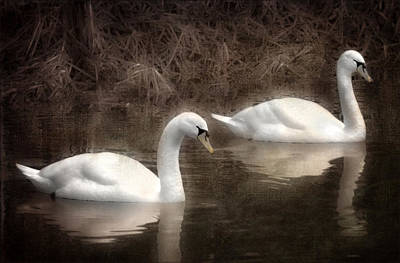 Swans For Life Art Print by Jason Green