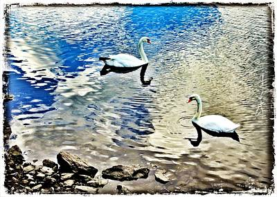 Swans Photograph - Swans Heading In Opposite Directions by Aurelio Zucco