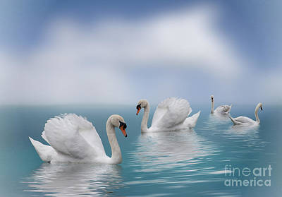 Photograph - Swans In Paradise by Shirley Mangini