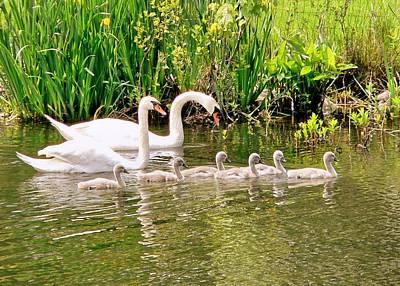 Art Print featuring the photograph Swans by Janice Drew