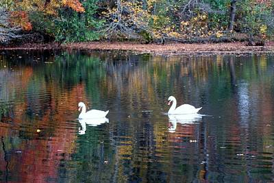 Art Print featuring the photograph Swans by Karen Silvestri
