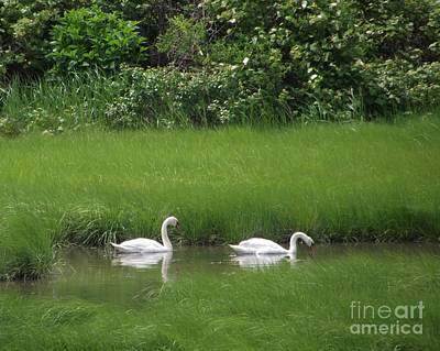Photograph - Swans Of Chatham by Michelle Welles