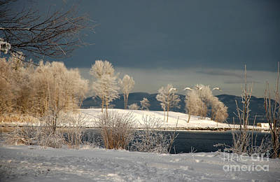 Art Print featuring the photograph Swans On A Frosty Day by Randi Grace Nilsberg