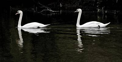 Photograph - Swans On The Lake by Jeremy Hayden
