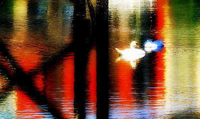 Art Print featuring the photograph Swans Sojourn by Aurelio Zucco