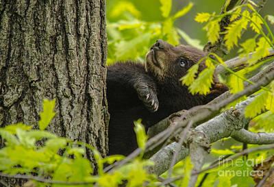 Photograph - Swatting A Leaf by Cheryl Baxter