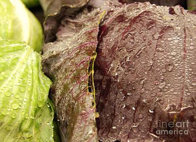 Photograph - Sweaty Lettuce by Staci Bigelow