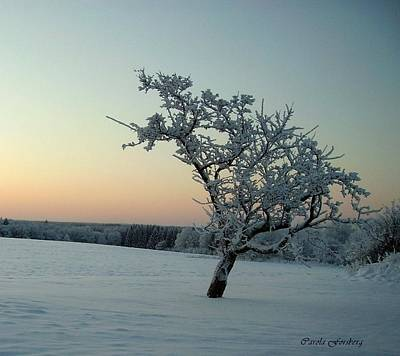 Photograph - Swedish Winter by Carola Ann-Margret Forsberg