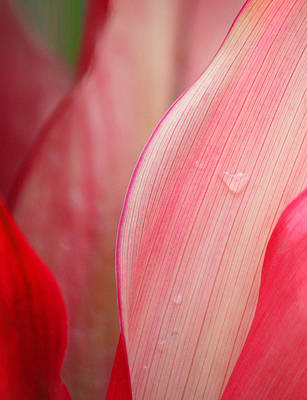 Sweetness Photograph - Sweet Angel's Tear by The Art Of Marilyn Ridoutt-Greene