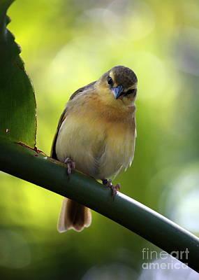 Photograph - Sweet Bird On Branch by Carol Groenen