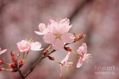 Sweet Blossom Art Print by LHJB Photography
