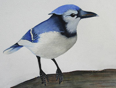Painting - Sweet Blue Jay by Mary Gaines