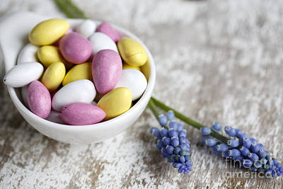 Hyacinths Photograph - Sweet Candy by Nailia Schwarz