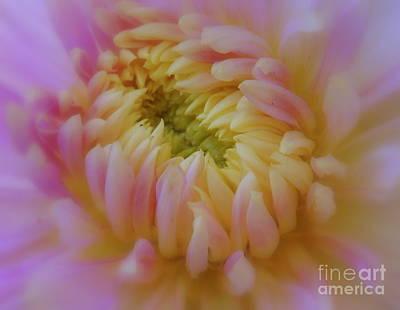 Fushia Photograph - Sweet Caroline by Lingfai Leung