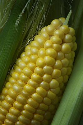 Sweet Corn - On The Cob Art Print by Nikolyn McDonald
