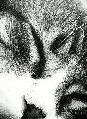 Gray Tabby Photograph - Sweet Dreams by Jacqueline McReynolds